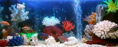 К популярным аквариумным рыбкам относятся... декоративные рыбы, которых содержат в аквариумах.